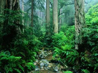обои Маленький ручей, в летнем заросшем лесу фото