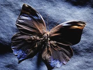 обои Чёрная бабочка фото