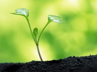 обои Молодой росток растения фото
