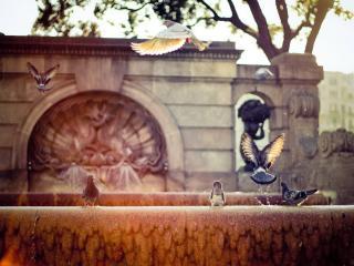 обои Голуби у фонтана фото
