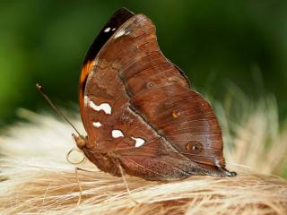 обои Бабочка и ковыль фото