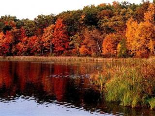 обои Осенний заброшенный пруд фото