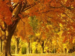 обои Старые осенние деревья в парке фото