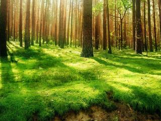 обои Красивый пейзаж зеленого леса фото