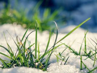 обои Снег на зеленой траве фото