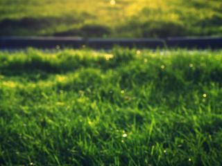 обои Ярко зеленая густая трава, лето фото