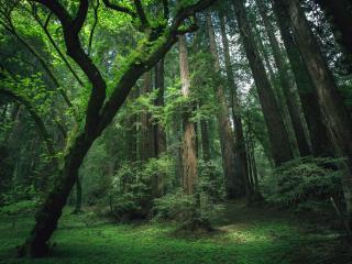 обои Деревья леса фото