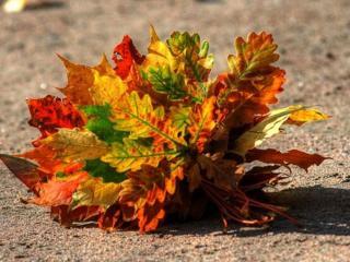 обои Букет осенних листьев фото