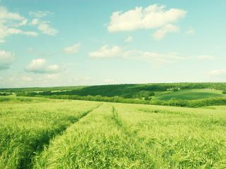обои Зеленеет природа фото
