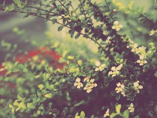 обои Ветки цветущих кустов фото