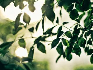 обои Листва зеленая дерева фото