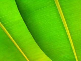обои Зеленые листья фото