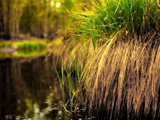 обои Трава у озера фото