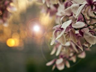 обои Цветение в бликах фото