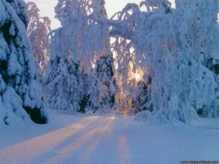обои Прекрасная зима фото