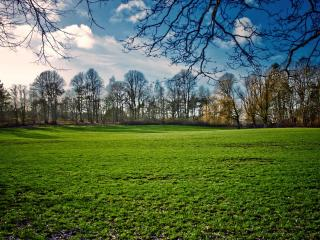 обои Зеленая поляна фото