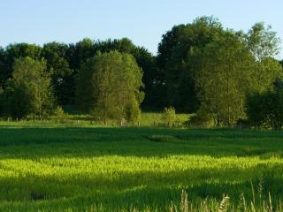 обои Зеленое поле посевов фото