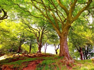 обои Летние деревья на горе фото