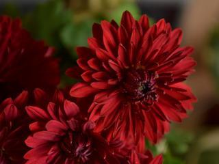 обои Красные красивые цветы