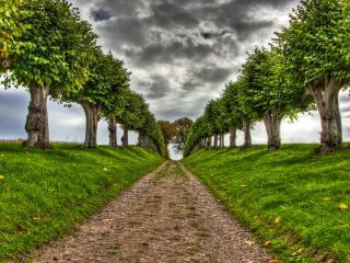 обои Ровная дорога с аккуратными деревьями фото