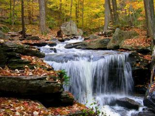 обои Речной поток в лесу осеннем фото