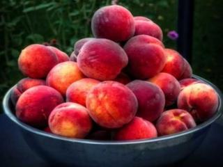 обои Красные,   сладкие персики фото