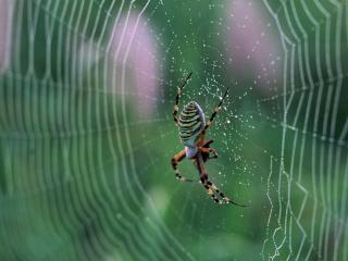 обои Паук в центре паутины фото