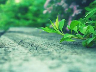 обои Веточка травы растет над землей фото