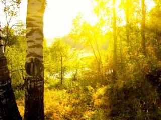 обои Желтый цвет осени фото