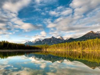 обои Ряды лесные у речки фото