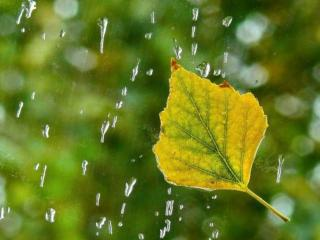 обои Осенний дождь роняет слезы фото