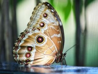 обои Бабочка на голубом стекле фото