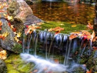 обои Водопад - осенний танец фото