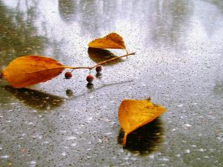 обои Осенний дождь и листья фото