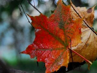обои Падают осенние листья фото