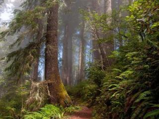 обои Утро в старом лесу фото
