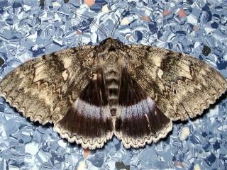 обои Бабочка на голубом фото
