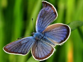 обои Бабочка на зелёном фоне фото