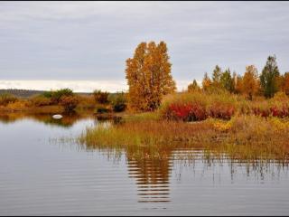 обои Осенние цвета Заполярья фото