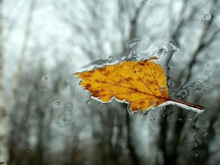 обои Осенний листок в замёрзшей лужице фото
