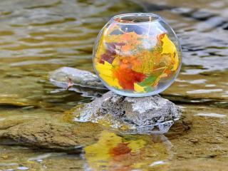обои Осень в аквариуме фото