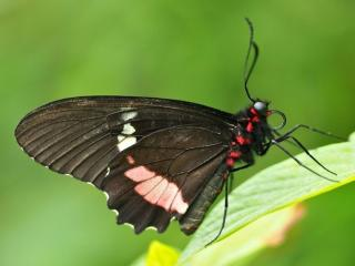 обои Бабочка на зелёном фото