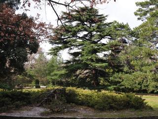 обои Пейзаж с хвойными деревьями фото