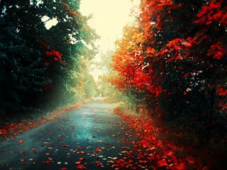 обои Красная опавшая листва клена на дороге фото
