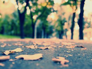 обои Листья лежат на дороге фото