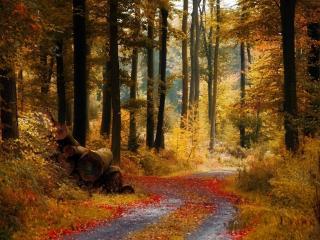 обои Осенний лес с опавшими листьями на дороге фото