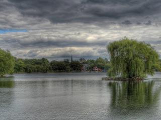 обои Островок с ивой на летнем пруду фото