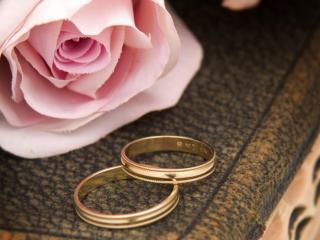 обои Обручальные кольца у розы