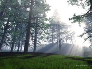 обои Трехмерное изображение леса фото