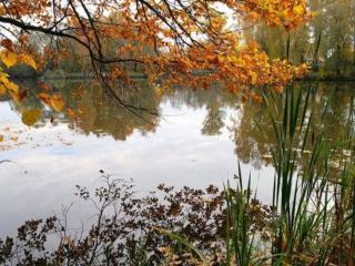 обои Осень на дачном пруду фото